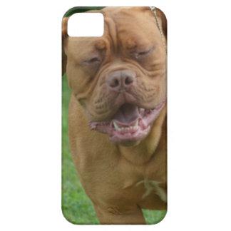 Dogue de Bordeaux iPhone SE/5/5s Case