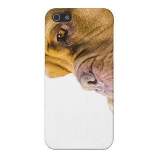 Dogue de Bordeaux iPhone SE/5/5s Cover