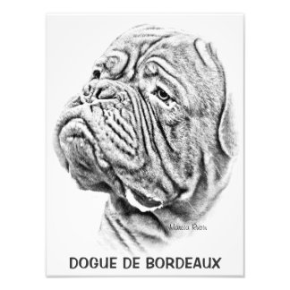 Dogue De Bordeaux - mastín francés Fotografia