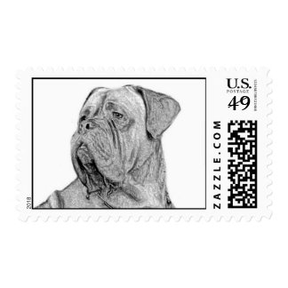 Dogue de Bordeaux postage
