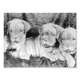Dogue de bordeaux puppies photo print