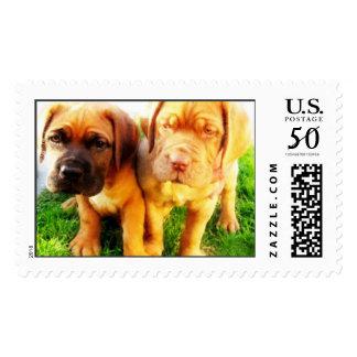 Dogue de Bordeaux puppies stamps