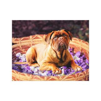 Dogue de Bordeaux Sitting on Basket full of Petals Canvas Print