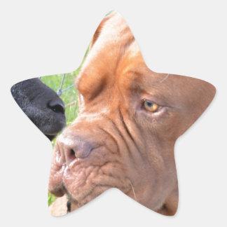 Dogue de Bordeaux Star Sticker