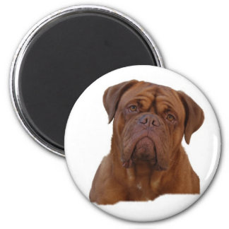 Dogue de Bourdeaux Magnet