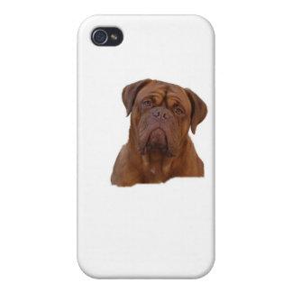Dogue De Bourdeaux mastín francés iPhone 4 Carcasa
