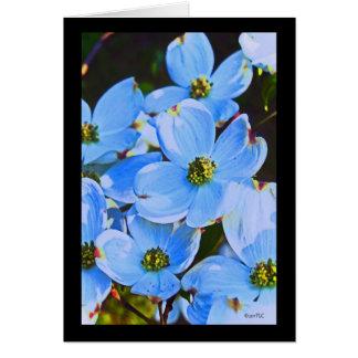 Dogwood azul Notecard Tarjeta Pequeña