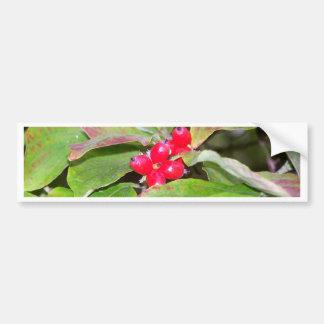 Dogwood Berries Bumper Sticker