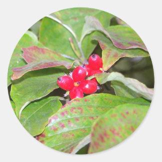 Dogwood Berries Classic Round Sticker