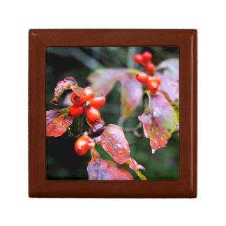 Dogwood Berries Gift Box
