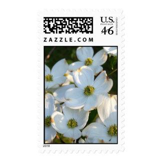 Dogwood blanco (crudo) sello