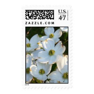 Dogwood blanco (crudo) sello postal