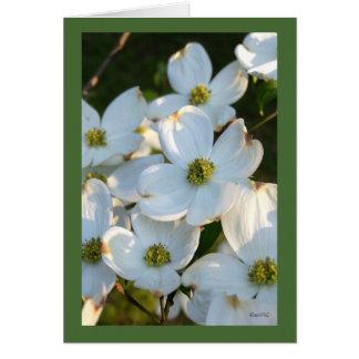 Dogwood blanco (crudo) tarjeta pequeña