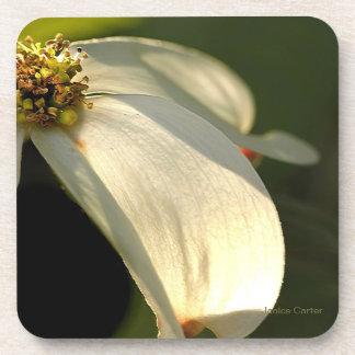 Dogwood Bloom Coaster
