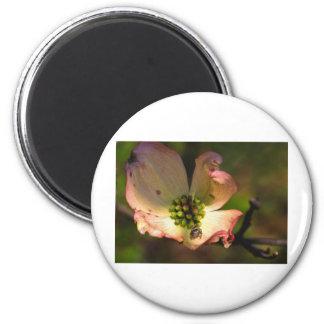Dogwood Blossum & Spider 2 Inch Round Magnet