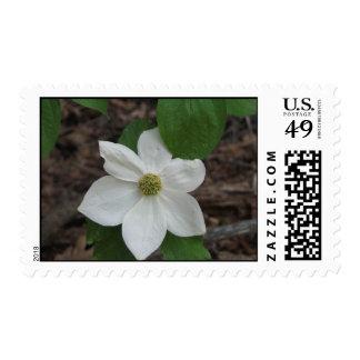 dogwood close up postage stamp