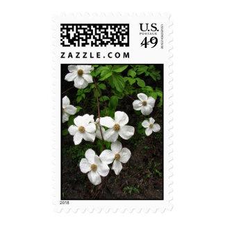Dogwood cluster stamps