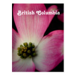 Dogwood de la Columbia Británica Postales