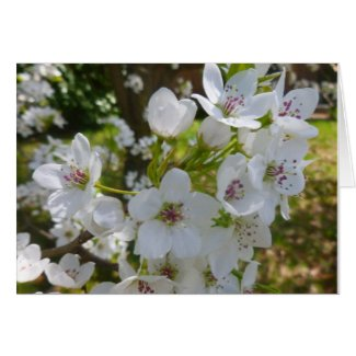 Dogwood floral card