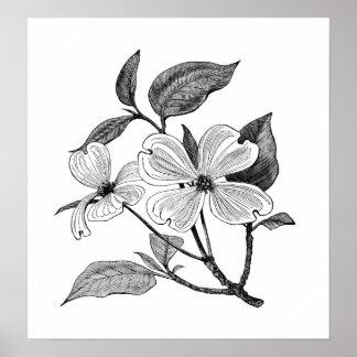 Dogwood floreciente póster