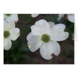Dogwood floreciente tarjetas