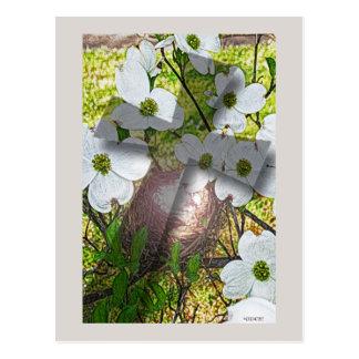 Dogwood Flower and Cross Postcard
