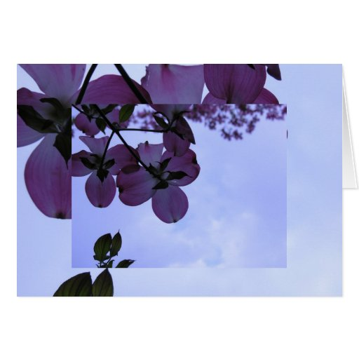Dogwood Flowers in Pink Greeting Cards