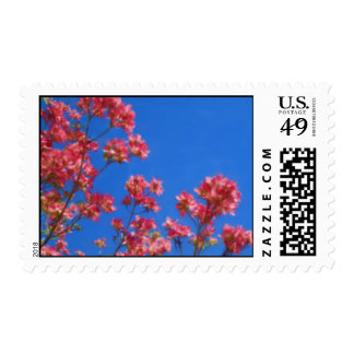 dogwood postage stamps