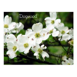 Dogwood Postales