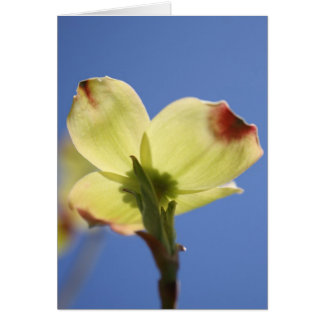 Dogwood Reaching For The Sun Card