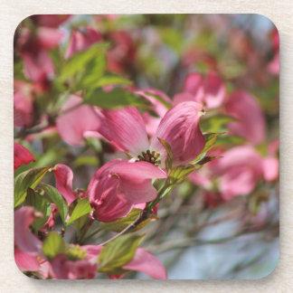 Dogwood rosado en la floración posavasos de bebidas