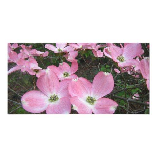 Dogwood rosado tarjeta personal con foto