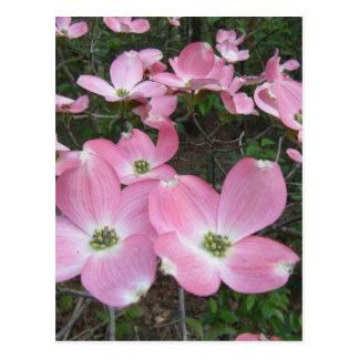 Dogwood rosado tarjeta postal