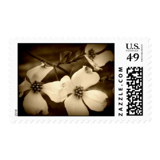 dogwood sepia postage stamps