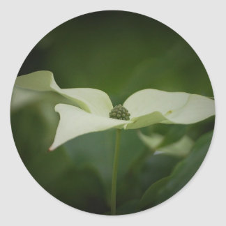Dogwood Tree Flower Sticker