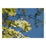 Dogwood Tree Flowers Greeting Cards Blue Sky