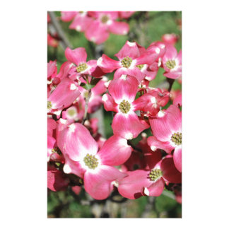 Dogwood Tree in Bloom Stationery