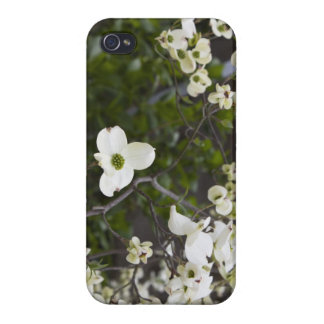 Dogwood Tree in Full Bloom iPhone 4 Cover