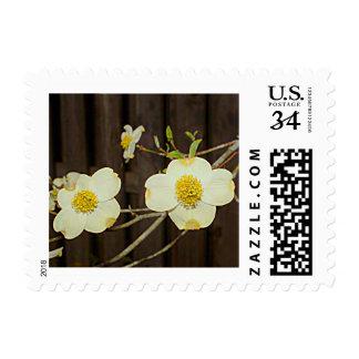 Dogwood Tree (Missouri) Postage