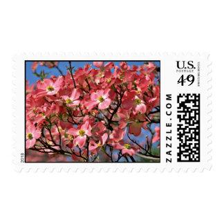 Dogwood tree Pink flowers Stamp