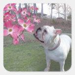 Dogwood y dogo etiqueta