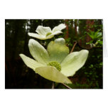Dogwoods and Redwoods in Yosemite National Park Card