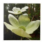 Dogwoods and Redwoods in Yosemite National Park Ceramic Tile