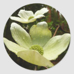Dogwoods and Redwoods in Yosemite National Park Classic Round Sticker