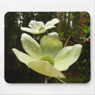 Dogwoods and Redwoods in Yosemite National Park Mouse Pad