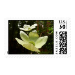 Dogwoods and Redwoods in Yosemite National Park Postage