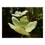 Dogwoods and Redwoods in Yosemite National Park Poster
