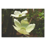 Dogwoods and Redwoods in Yosemite National Park Tissue Paper