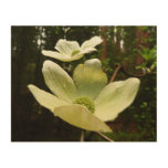 Dogwoods and Redwoods in Yosemite National Park Wood Wall Art