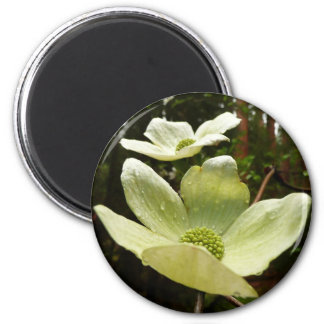 Dogwoods and Redwoods Magnet